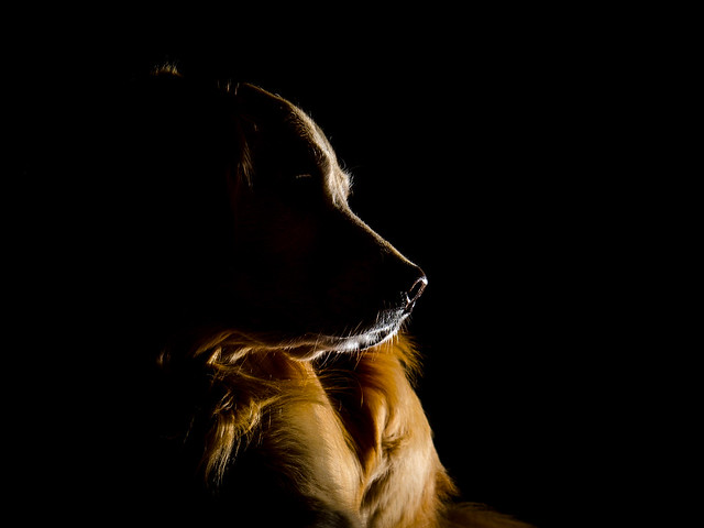 Dog in the Dark