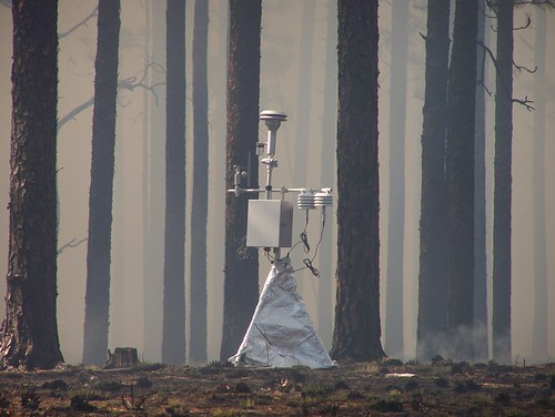 A Environmental Beta Attenuation Monitor in a forest
