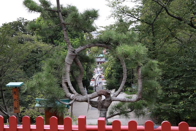 做成圓形的樹枝造景