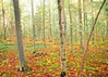 early autumn forest by Hal Halli