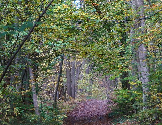 Giverny-164.jpg