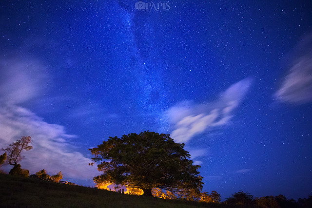 Milky Way over the Great Tree