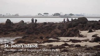 St John's Island: the other side of Singapore's Marine Park