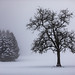 Foggy snow @ Ardennes by Jan Hoogendoorn