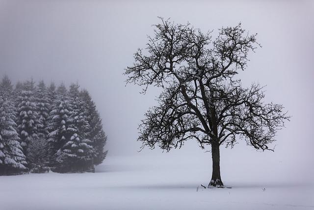 Foggy snow @ Ardennes