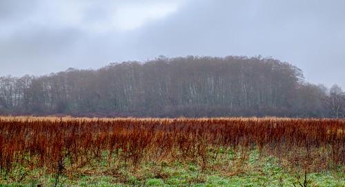 ebeyisland landscape field fog trees abstract driedgrass grass