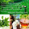 Green Tea Extract by Natures SlimTea