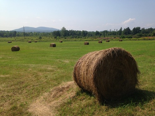 Round bales of hay in the fields