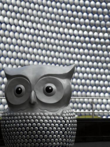 Bullring Owl