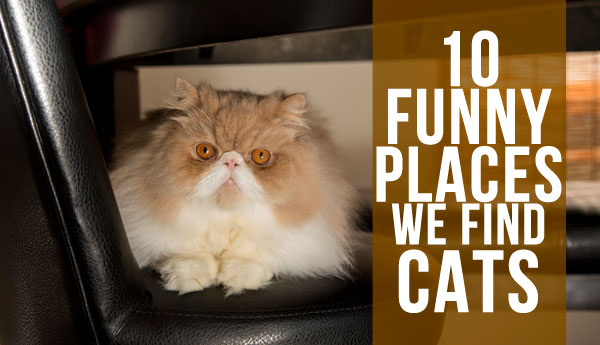 10-places-we-find-cats