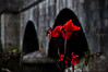 Rojo en el puente by T Fraguas