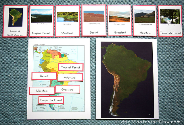 Biomes of South America Activity