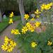 """Churchyard Flora"" by Adam Swaine"