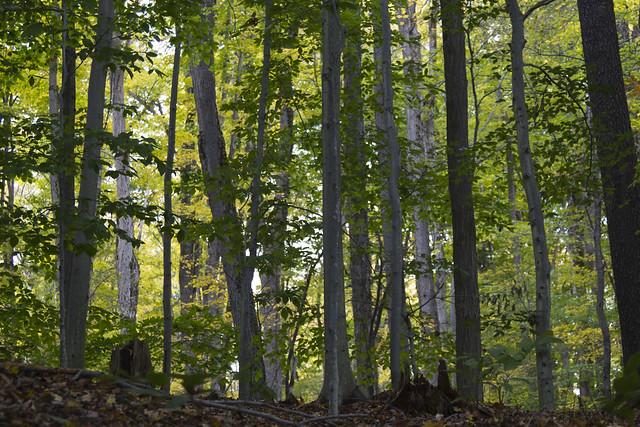 IMG_6844Light Through the Trees_1