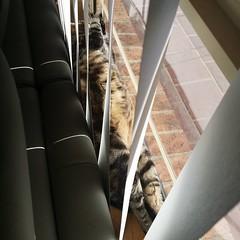 It's a cat's life #catsofinstagram #sunbeam #springmorning #lazy #unfiltered