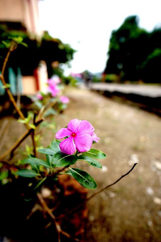 Wide Angle Bloom