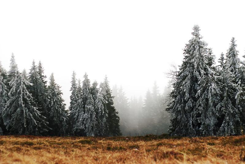 Schwarzwald Herbst 2015 071gimp