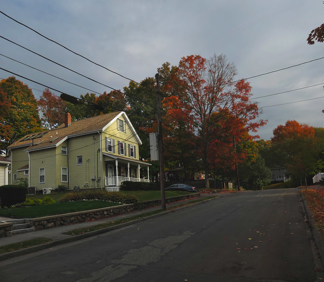 Changing maples on Nichols St; Wakefield, MA (2015)