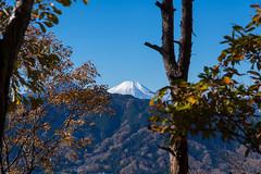 木々の隙間から・・・富士山