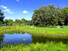 Belle's Pond Reflection