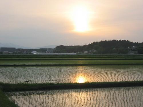 sunset field japan rice farm rokunohe