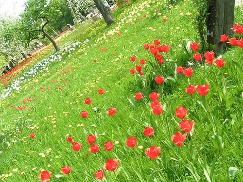Tilted Tulip Beds