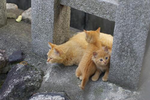 Today's Cat@20060619