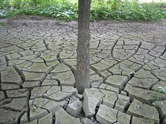 soil, drought, tree, yard,