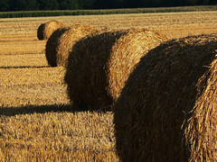 agriculture, straw, hay, field, grass, plant, harvest, rural area,