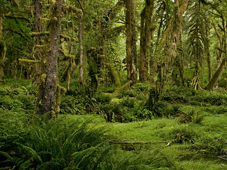 Quinault Rainforest . 21
