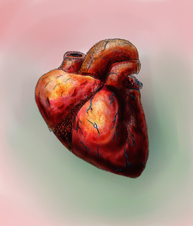 Human Heart W/ color