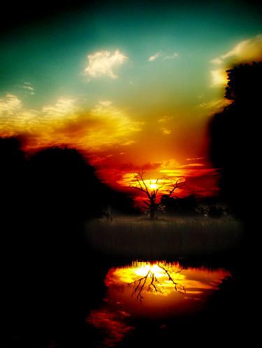 reflection tree sunrise dawn deadtree slough berkshire kevday damnation langleypark