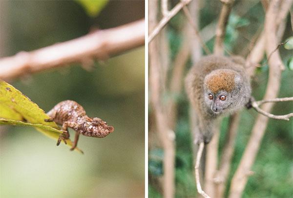 RYALE_Madagascar_Blog2_023