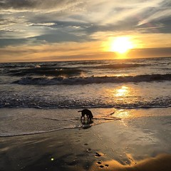 This might be my favorite place... #beaglesunset