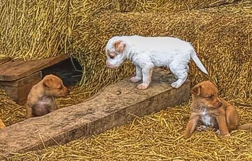 Cachorrillos cazadores.