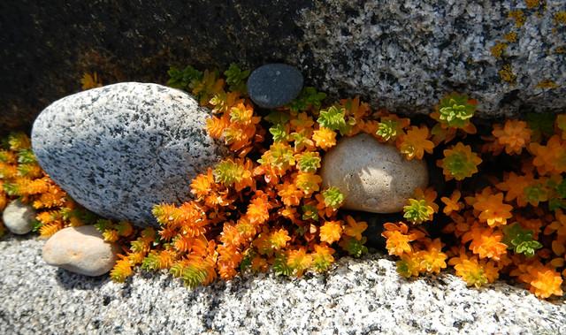 A Stoney Beach on Inishowen Peninula in Ireland