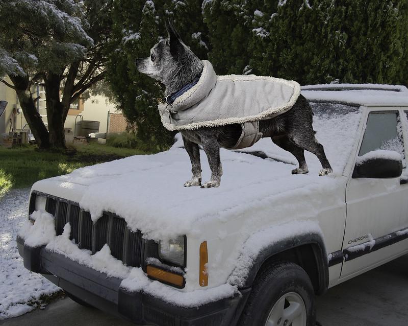 Betty Battles Early Winter