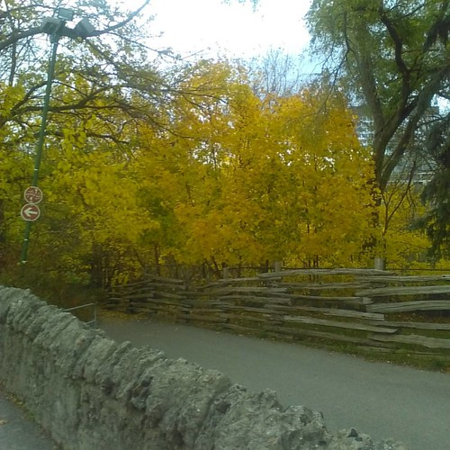 Descending, 2 #toronto #riverdaleparkwest #riverdalepark #autumn