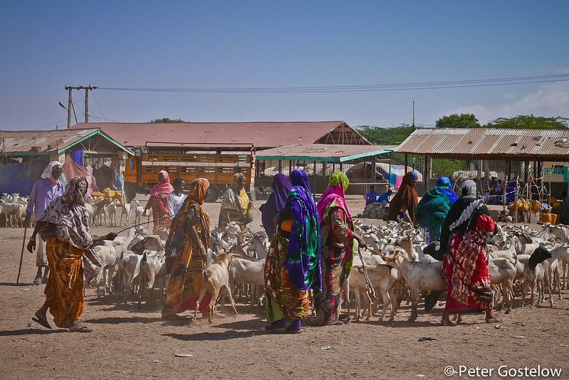 Women and goats