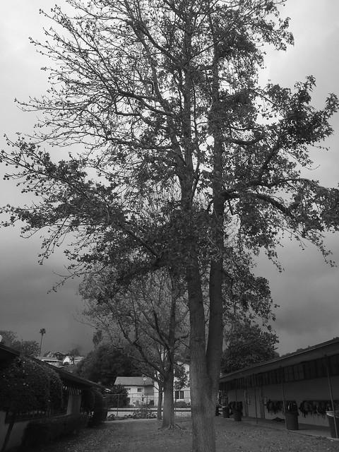 Before The Rain - Camera Noir