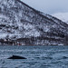 Whale at Kaldfjord by Davescunningplan