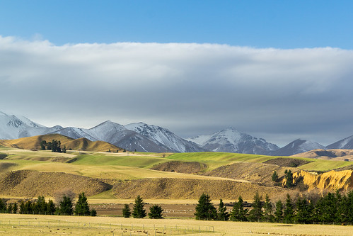 newzealand mountains landscape farmland hills nz southisland centralotago tussock pinetrees highcountry lateafternoonlight clifferosion softcontours kyeburndiggings mtbuster danseyspassrd