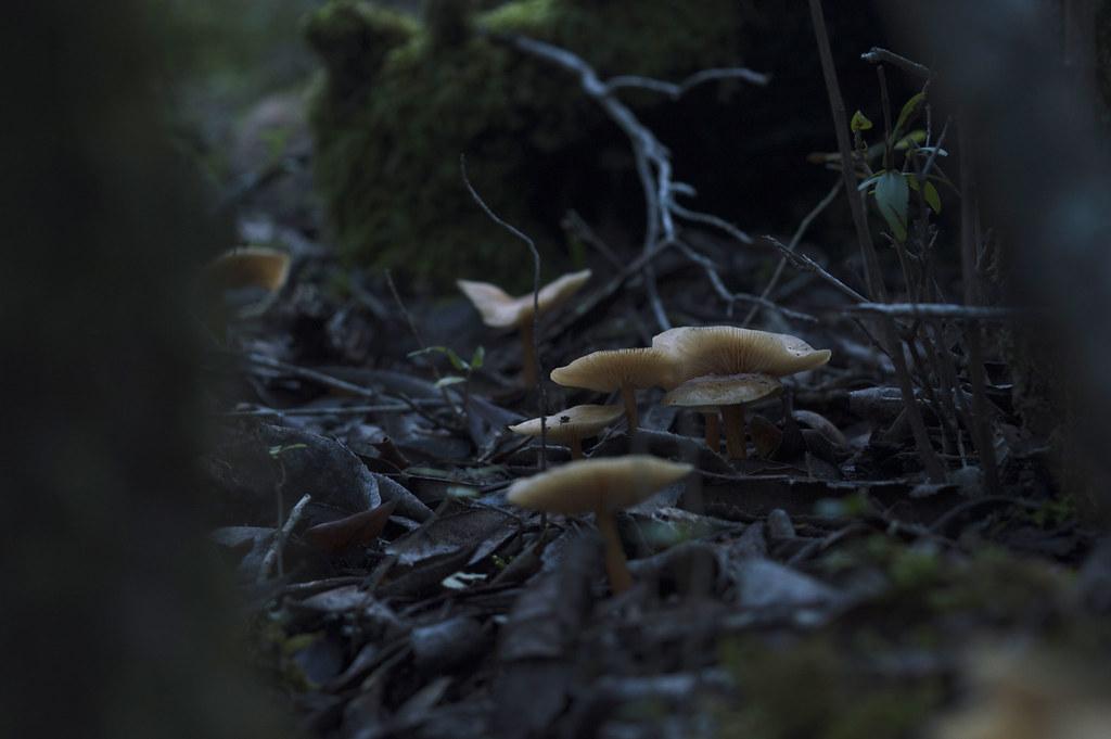 nel bosco ci son funghetti esposizione ritoccata