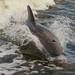 DolphinBreach