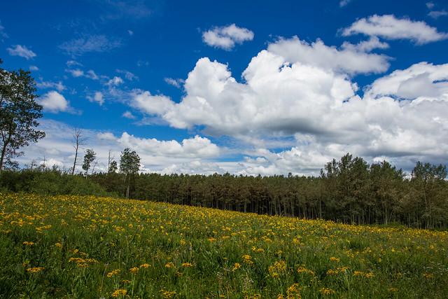 A Meadow in Bloom