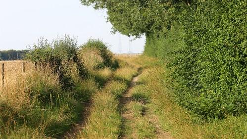 Sunday morning walk to Windy Ridge