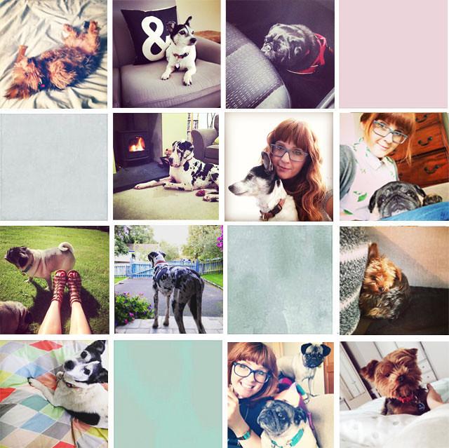grid-life-pets