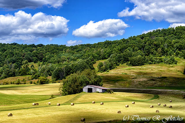 Summer Morning Hay Field