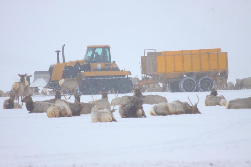 IMG_0719 Hay Feeding, National Elk Refuge