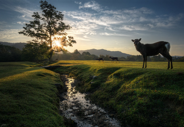 Dawn in Nara
